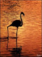 FLAMINGO SUNSET by Yair-Leibovich