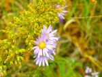 Wild flowers by Pebbles246