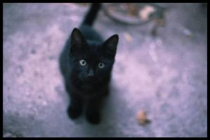 Black Kitten by 3utthead
