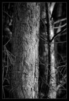tree bark BW by MarcinG1