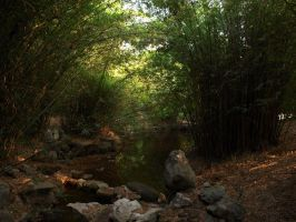 Bamboo Shrove by angusfk