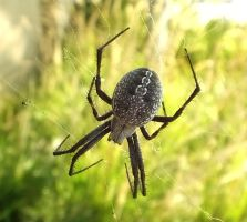 Spider 02 by Treeclimber-Stock