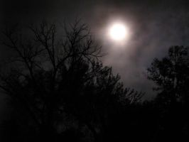 Moonlight Through Trees 4 by DarkMaiden-Stock