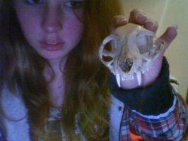 cat skull by CannabisCow