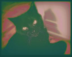 Melancholic Cat by surrealistic-gloom