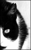 Cat's Face by Sudlice