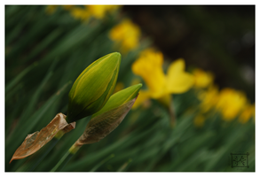 Bud Before the Bloom 2 by Cwen-Natulcien