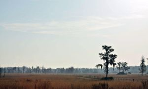 Disappearing Florida Landscape by gjheitz