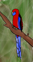 Crimson Rosella by Ithinkurqreat