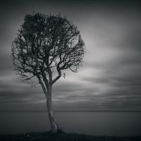 Storm Tree by kapanaga