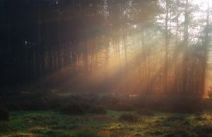 Misty Sunbeams by Peenbuiker