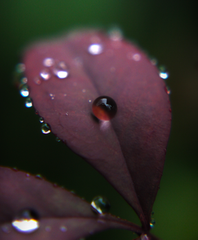 Droplets of Red. by Zaellrin