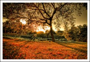 sunset song by sanwahi