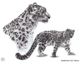 Snow Leopards by KatGirlStudio