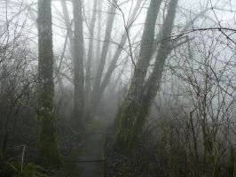 Foggy Stairs by Track-Maidens