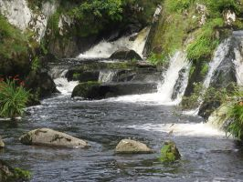 River in Southern Ireland by DungeonStock
