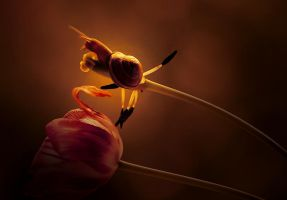 snail with tulip II. by AdrianaKH-75