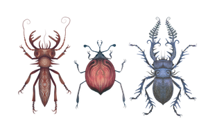 Beetles by V-L-A-D-I-M-I-R