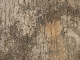 Wood 4 by CharadeTextures