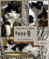 My cat Lurifax, pack 02 by LunaNYXstock