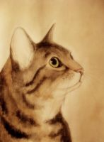 cat profile by moussee