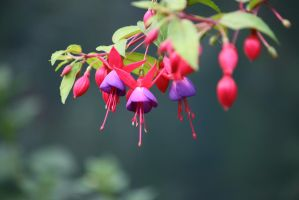 view to fuchsias 27 by ingeline-art