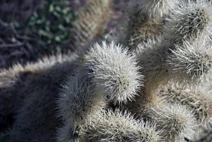 Cholla by xplosivemind