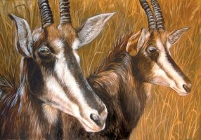 Sable Antelope by ursulav