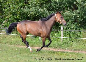 Justification - Stock 5 by Horses--Stock
