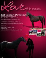 QuickAd: Valentine's Day Special by Camo-n-Spurs