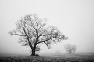 Portrait of the tree VI by EmilStojek