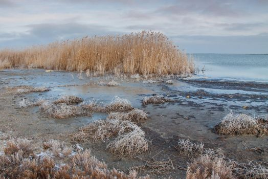Cold Morning on the Lakeshore by SunnyMel