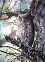 African Scops Owl by WillemSvdMerwe
