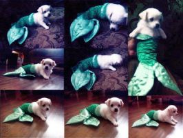 Mermaid dog by NikKarLolzz