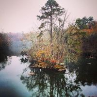 Riverbanks Zoo and Gardens: River Island by Natures-Studio