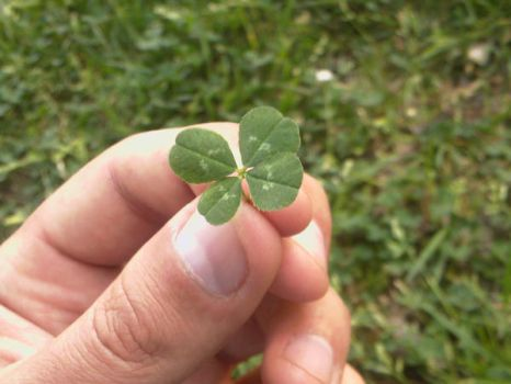 Clover by go4brendon
