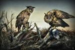 Rapaces... by ThyC-Graphics