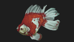 15/285 fish timed study by IamDeathskull