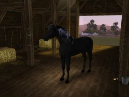 Sims3 Pets Creation The Black Stallion by Senwolf10