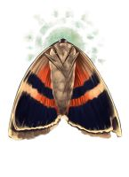 Moth by PlasticBee