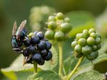 Fly-ing Fruit by InayatShah