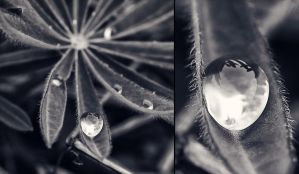 Drops by Peterix