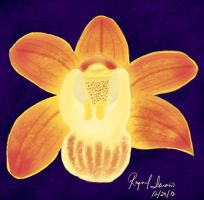 Orchid by adamantia3190
