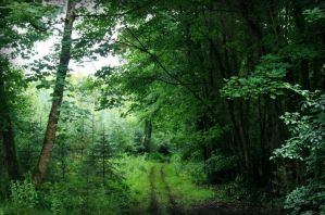 Forest Road by Navanna