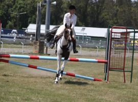 STOCK Showjumping 394 by aussiegal7