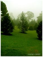 green paradise and fog by Zlata-Petal