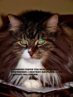 Lolcats Entry 008 by Wolfpack5554