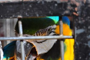 caged color by palombasso