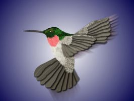 Humming bird by omagrandmother