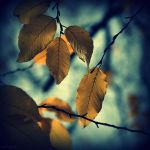 Fall leaves by lostknightkg